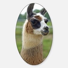 llama2_lp Sticker (Oval)