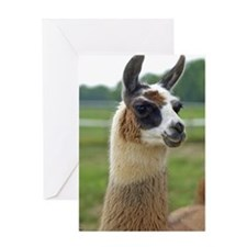 llama2_lp Greeting Card