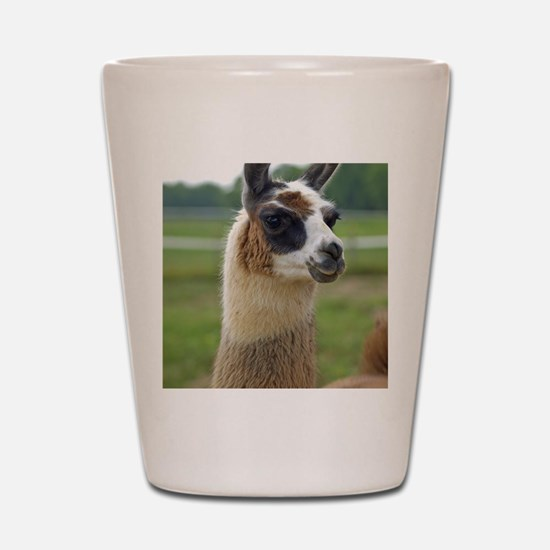 llama2_lp Shot Glass