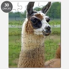 llama2_lp Puzzle