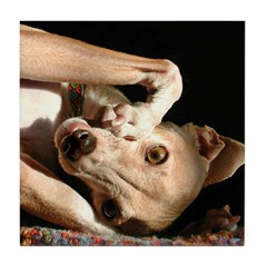 Italian Greyhound Smunch Tile Coaster
