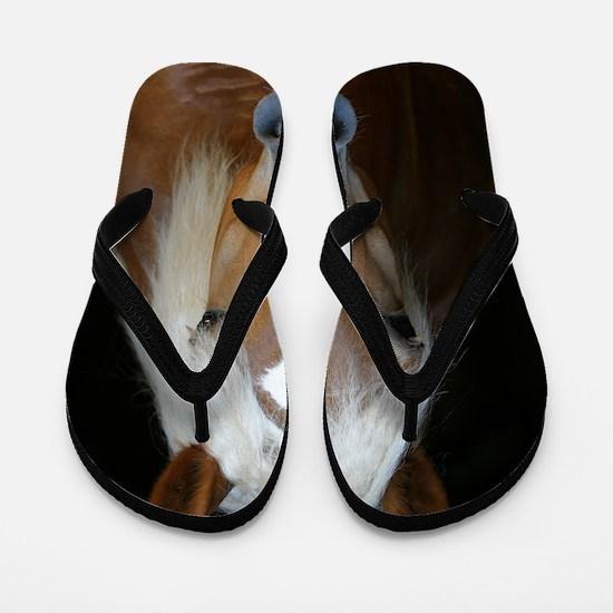 cp_hafi1_vert_cover Flip Flops