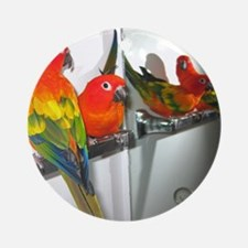 Red Factor Sun Conures Jan 14 20102 Round Ornament