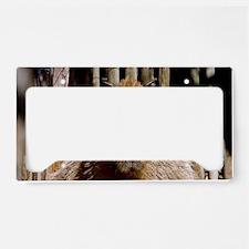 (1) Capybara Staring License Plate Holder