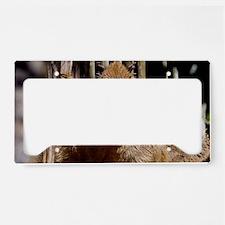 (6) Capybara Staring License Plate Holder
