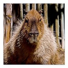 "(15) Capybara Staring Square Car Magnet 3"" x 3"""