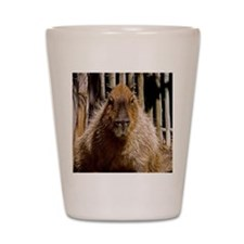 (15) Capybara Staring Shot Glass