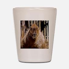 (15) Capybara Staring Shot Glass