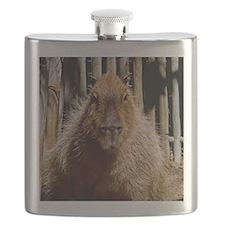 (15) Capybara Staring Flask