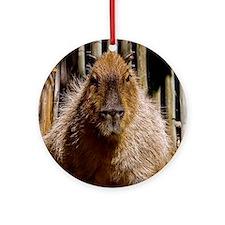(15) Capybara Staring Round Ornament