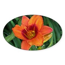 Daylily Fife and Drum Decal