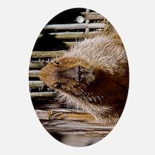 (9) Capybara Staring Oval Ornament