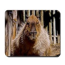 (12) Capybara Staring Mousepad