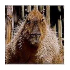 (12) Capybara Staring Tile Coaster