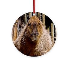 (12) Capybara Staring Round Ornament