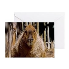 (12) Capybara Staring Greeting Card