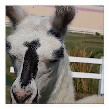 "Llama Frowns Square Car Magnet 3"" x 3"""