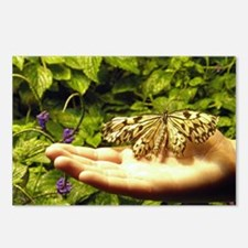 PSTR-butterfly copy Postcards (Package of 8)
