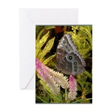 PSTR-blue-butterfly copy Greeting Card