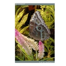 PSTR-blue-butterfly copy Postcards (Package of 8)