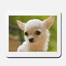 Chiwawa Dog Mousepad