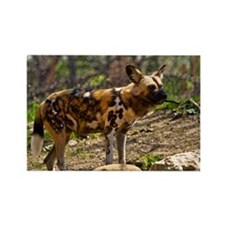 (10) African Wild Dog  1932 Rectangle Magnet