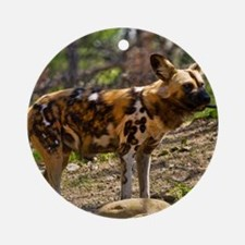 (12) African Wild Dog  1932 Round Ornament