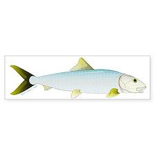Bonefish Bumper Bumper Sticker