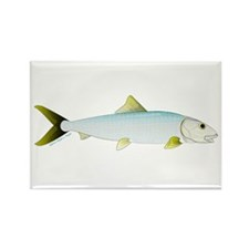 Bonefish Magnets