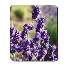 lavendars Mousepad
