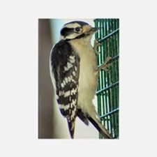Female Downy Woodpecker sm Rectangle Magnet