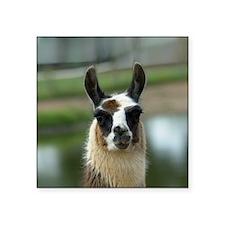 "llama1_btn Square Sticker 3"" x 3"""