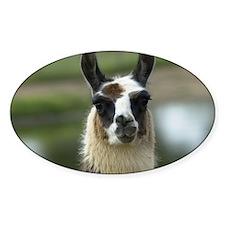 llama1_calendar Decal