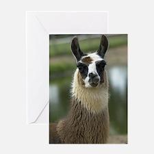 llama1_lframe Greeting Card