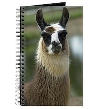 llama1_lframe Journal