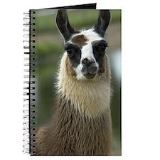 llama1_3Giphone Journal