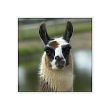 "llama1_mpad Square Sticker 3"" x 3"""