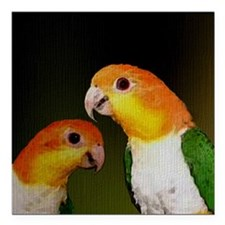 "whitebelliedcaique Square Car Magnet 3"" x 3"""
