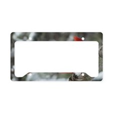 CdWntrMag License Plate Holder