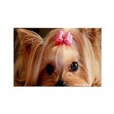 Yorkie L print Rectangle Magnet