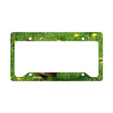 Phea4.58x2.91 License Plate Holder