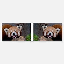 Red Panda for Mug Bumper Bumper Sticker