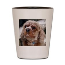 Ruby Cavalier King Charles in the snow Shot Glass