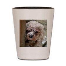 Ruby Cavalier King Charles Spaniel with Shot Glass