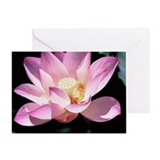 Lotus in bloom copy Greeting Card