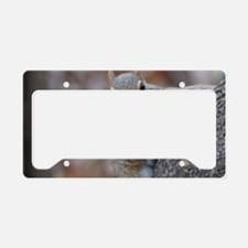 Juvenile Squirrel Up Aree License Plate Holder