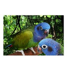 2bluepionus Postcards (Package of 8)