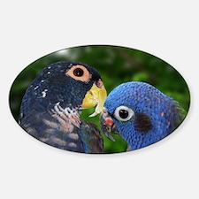 bronzebluepi Sticker (Oval)