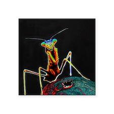 "Solarized Praying Mantis Square Sticker 3"" x 3"""