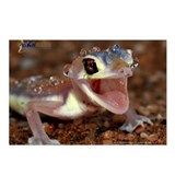 Gecko Postcards